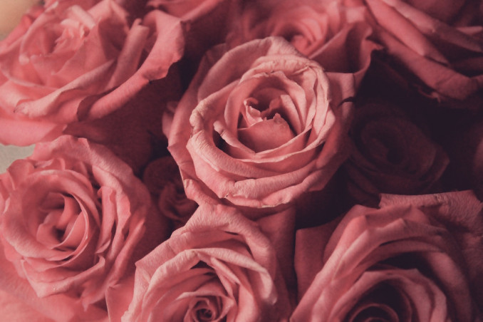 Rose Essential Oil: How To Use It To Scent A Home
